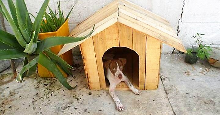 wood-pallets-dog-house