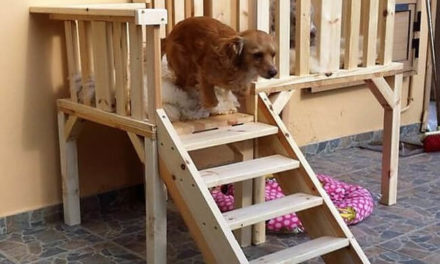 Repurposed Wood Pallets Dog Bed Plan