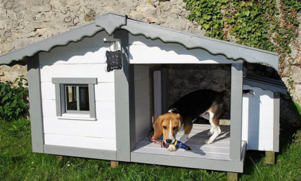 Cute Dog House Made with Wood Pallets